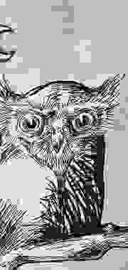 Dibujos La noche y el Búho