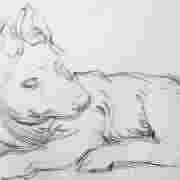 Dibujos Mi perro Merlín