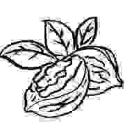 Nuez, Illustración para la marca «Tara solo nueces»